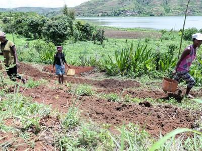 Lavoratori dei campi di Moringa